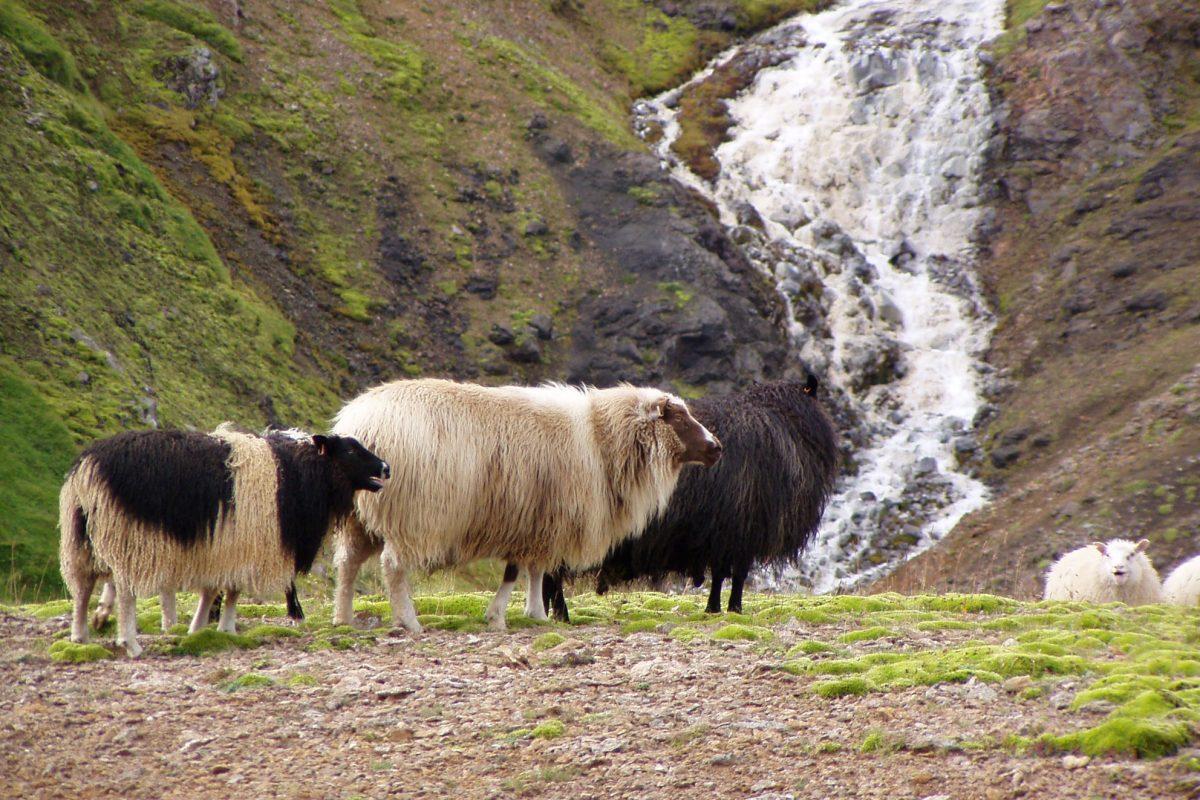 Hiking-East-Fjords-Iceland-