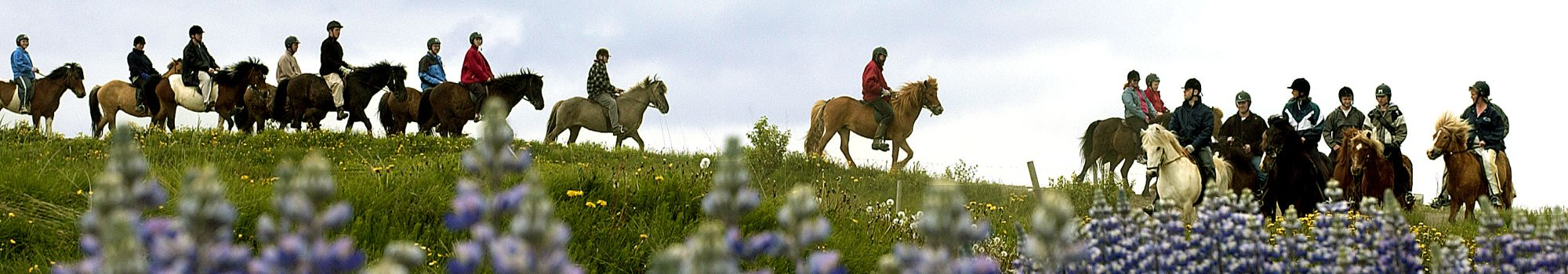 Horseback-riding-summer-iceland