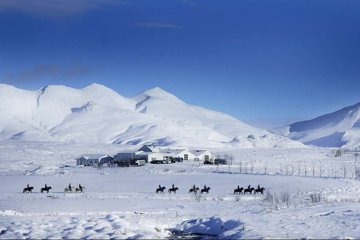 Icelandic-horses-riding-winter-iceland