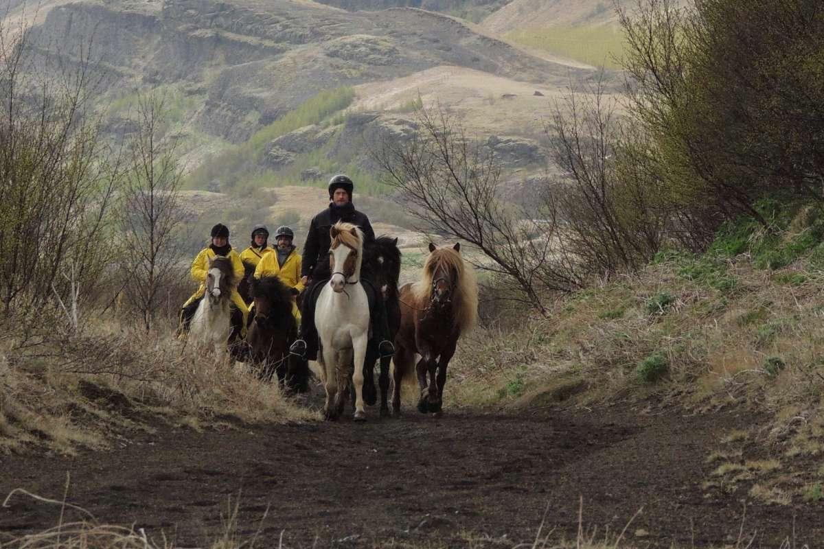Icelandic-horses-wilderness-iceland2-2Icelandic-horses-wilderness-iceland2-2
