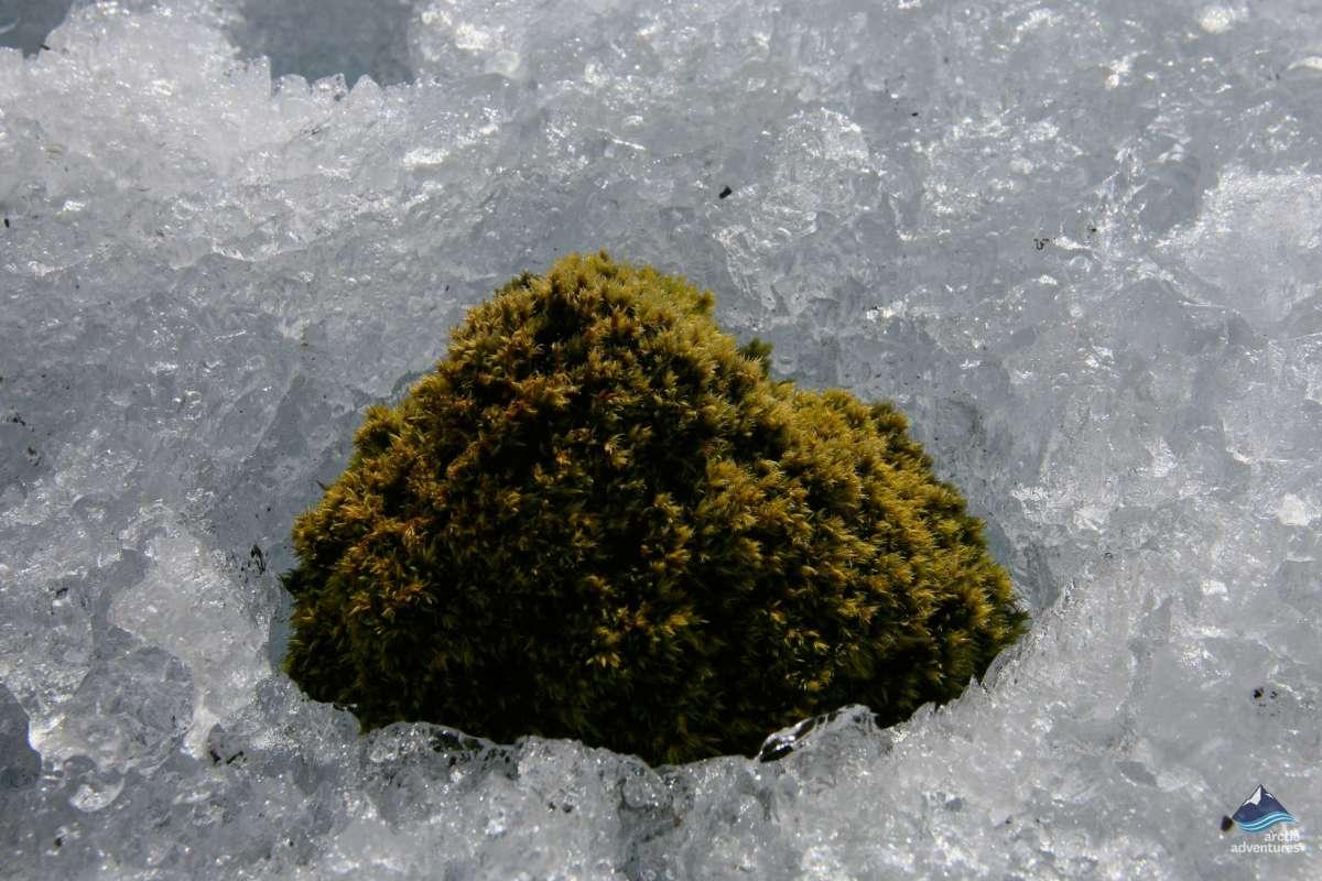 Glacier-Mouse-Vatnajokull-Iceland