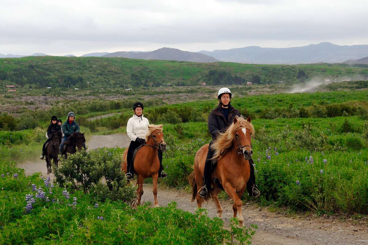 Horse Icelandic riding pictures