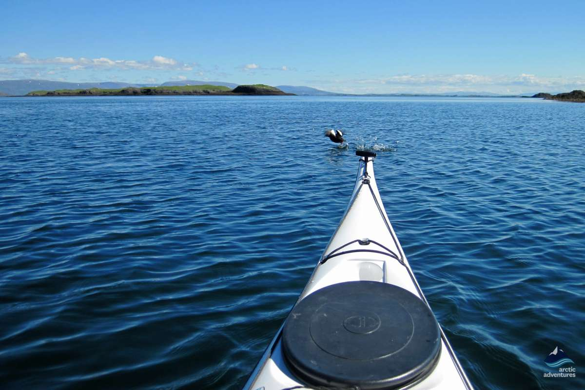 Puffin-Sea-Kayaking-tour-Iceland