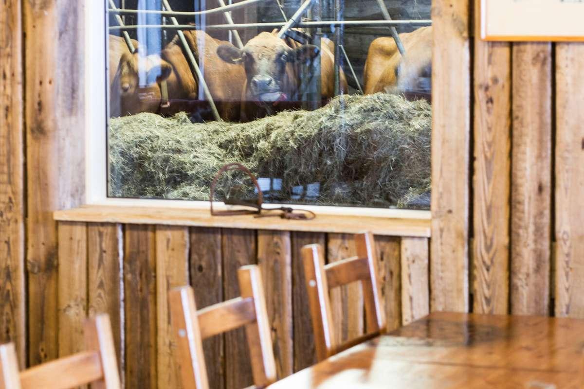 Foodtour-Iceland-GoldenCircle2