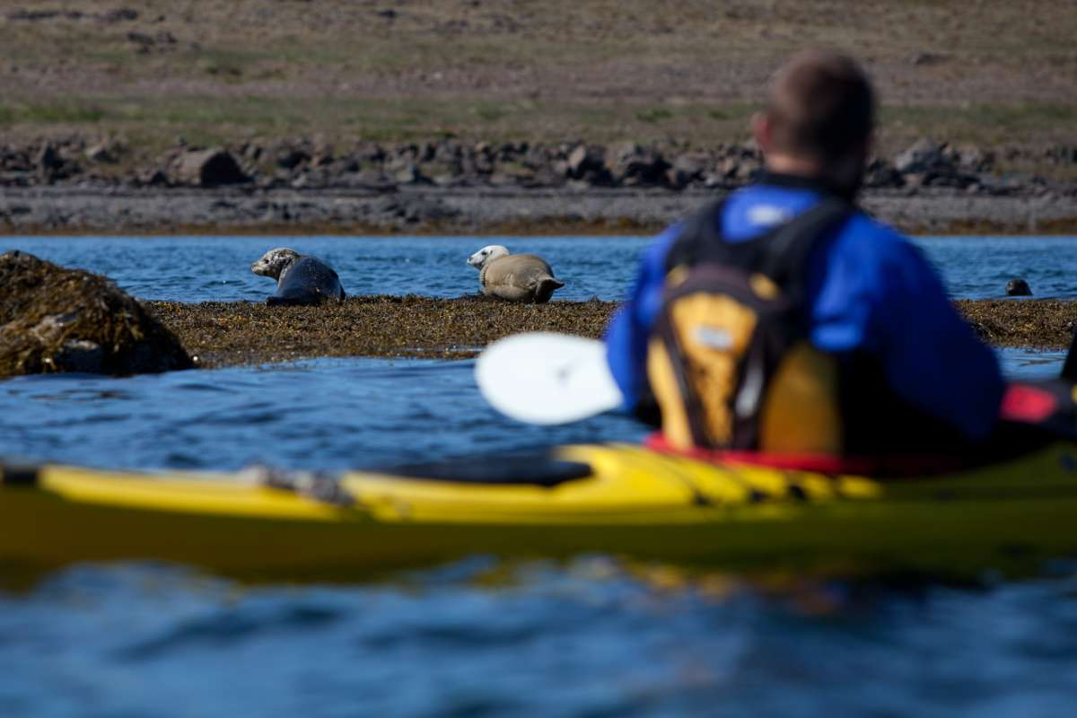 Seakayaking-with-seals