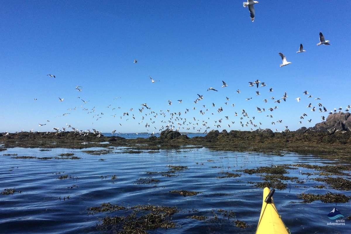 Sea-Kayaking-Stykkisholmur-Iceland