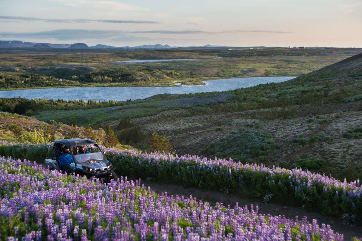 buggy ride in a lupin field iceland