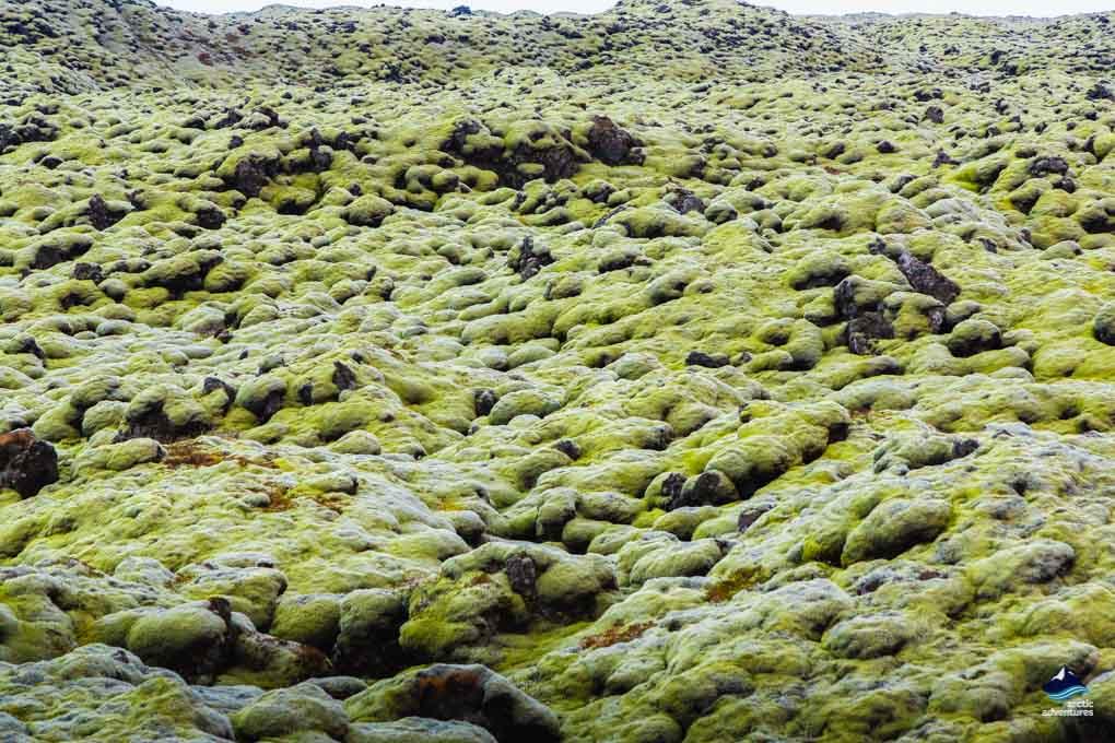 Eldhraun Lava Field South East Iceland
