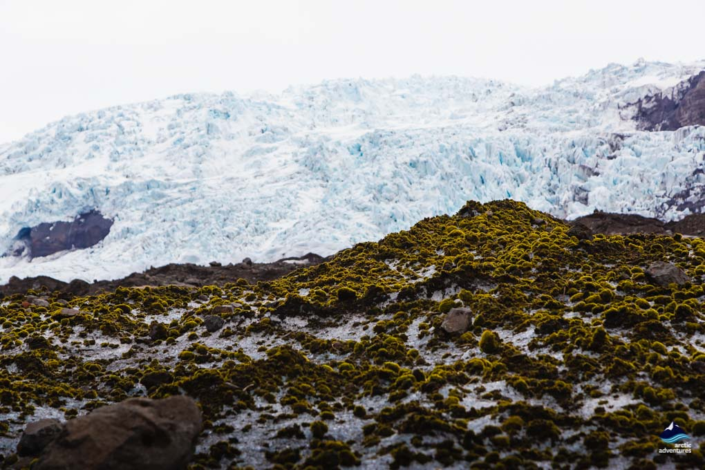 Glacier and Moss meet in Skaftafell Iceland