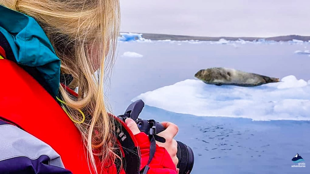 seal spotting at jokulsarlon glacoer lagoon
