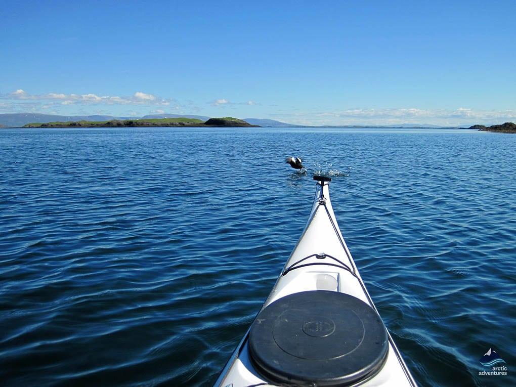 Sea Kayaking in Iceland