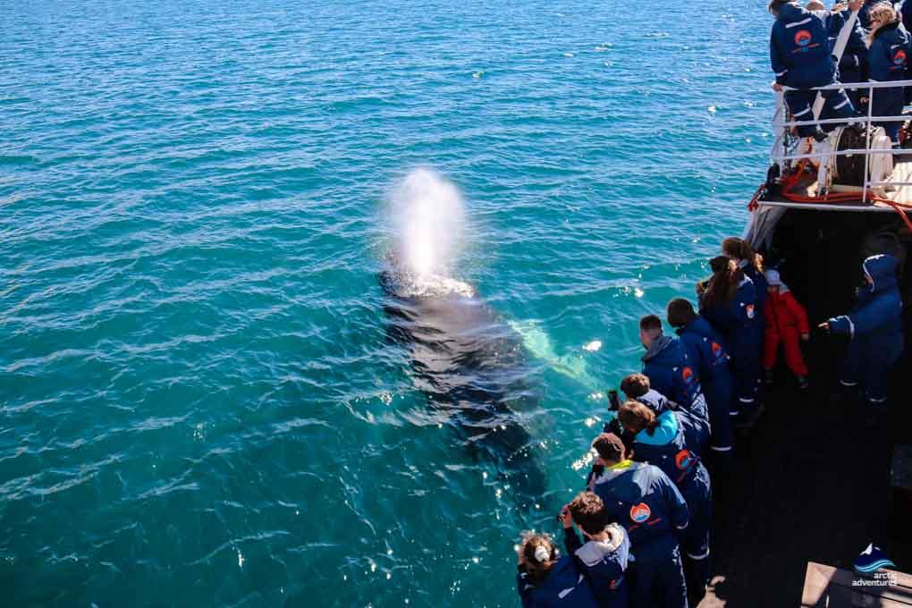Whale Breaching from Dalvik