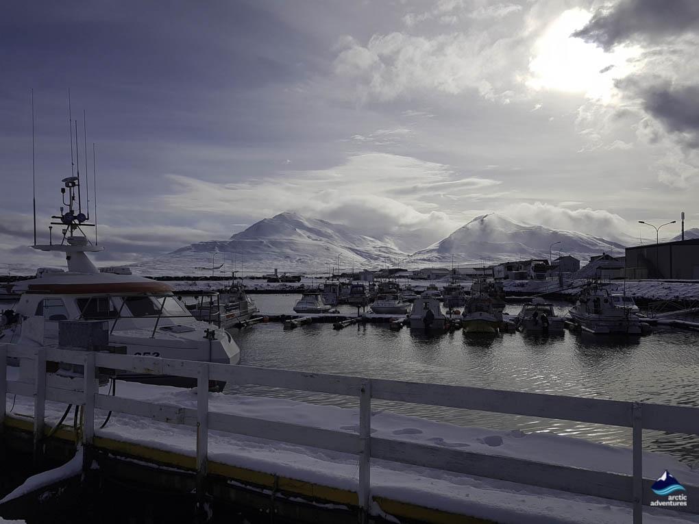 Dalvik in winter coat
