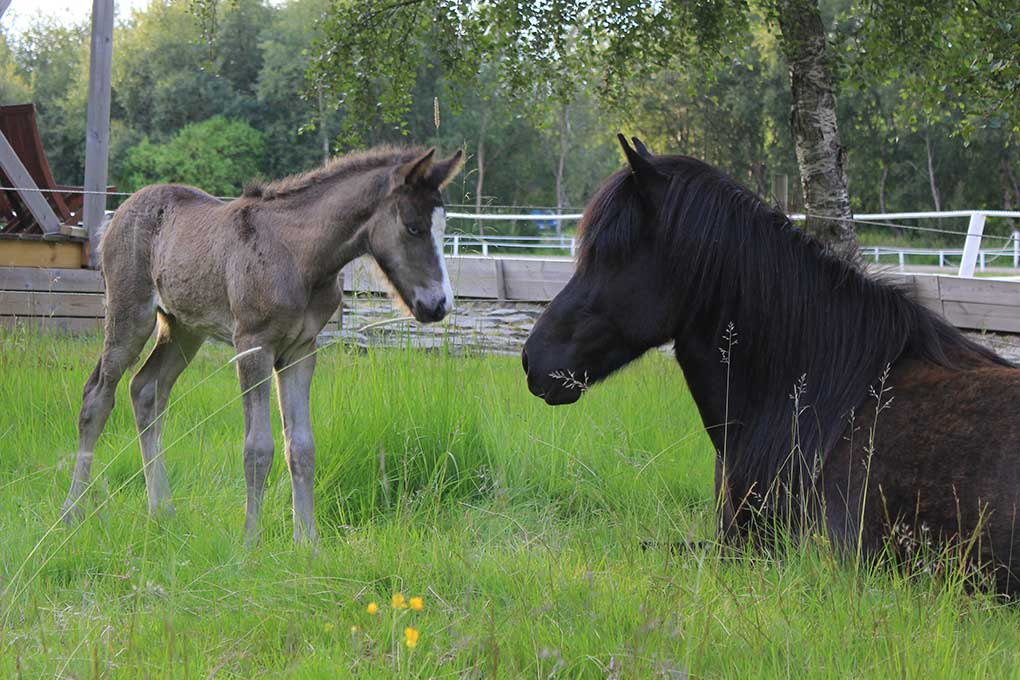 horse-farm