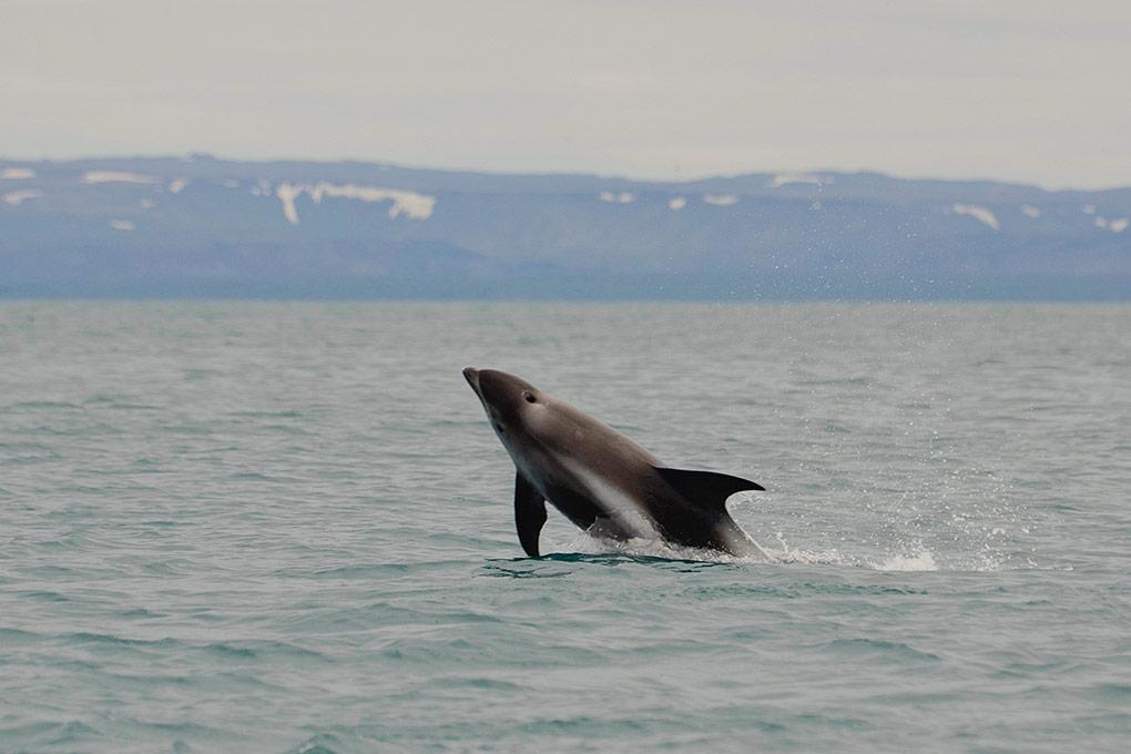 whale-sightseeing-fun