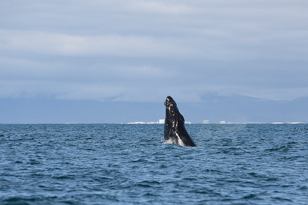 whale-watching-adventure